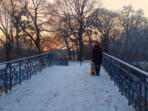 Sunset Magdeburg Stadtpark city park golden retriever