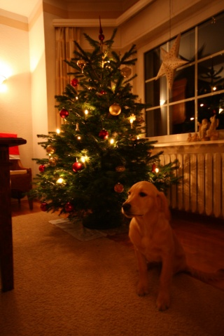 golden retriever christmas tree