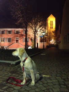 neuenburg church golden retriever anna