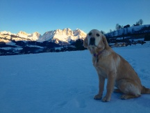 Austria golden retriever mountains